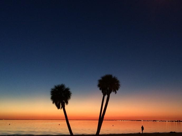 Peace Palms