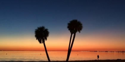 peace palms on Courtney Campbell Causeway